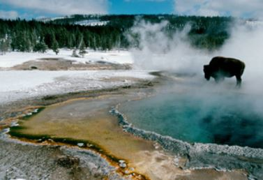 yellowstone during winter